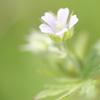 小さな花 ①