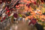 春と秋二度の見頃