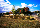 高畑町の秋