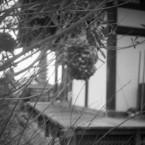 その他のカメラメーカー その他のカメラで撮影した(般若寺冬景④)の写真(画像)
