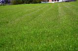 ペンペン草の楽園