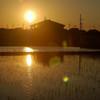 松原の夕暮れ