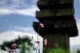 般若寺の見頃はまだでした。