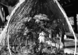 長谷寺の寒牡丹