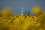 千早赤阪村の春。