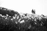 水仙の丘②