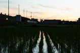 松原の夕焼け遠景
