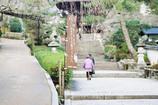 長谷寺冬景②