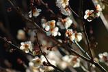観心寺の春間近②