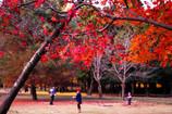 奈良の紅葉③