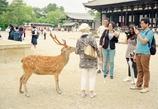 奈良のアイドル