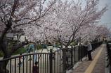 いつもの春