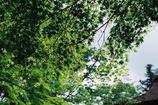 室生寺の初夏⑨
