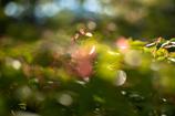 室生寺の初夏⑬