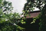 室生寺の初夏⑩