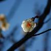 観心寺の春間近④