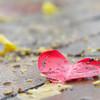 雨上がりの赤いハート
