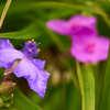 初夏の花 Ⅰ