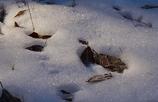 雪・落ち葉・霜 Ⅲ