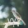 庭に来る野鳥たち Ⅶ