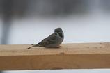 庭に来る野鳥たち Ⅳ