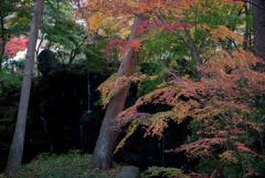 河口湖【久保田一竹美術館の紅葉】20181111