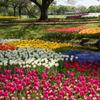 昭和記念公園【渓流広場の景色】⑪20180408