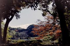新宿御苑【上の池あたりの紅葉】①20181215