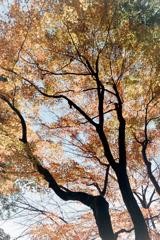 新宿御苑【楽羽亭あたりの紅葉】③20181215