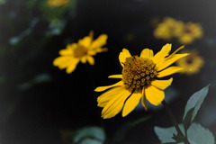 神代植物公園【品種不明の花】20180714