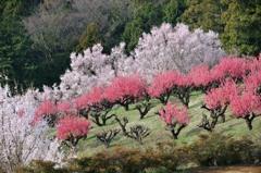 【桃畑】②20140329