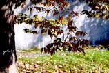 写真句:秋の陽3