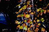 写真句:秋の陽4