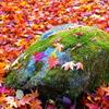 秋の彩り18:一期一会(写真歌)