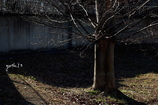 写真句: 冬の光1