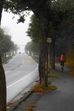 写真句:霧の朝:NTW102