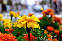 写真句:街に咲く花(NTW80)