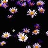 憂い忘れの花2