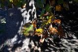 写真句:深まる秋