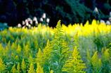 写真句:秋の野