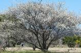 写真句:春来たり