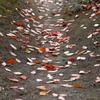写真エッセイ:落葉の小径