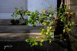 写真句:秋の陽2