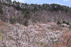 屏風岩の春