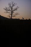 Deer World