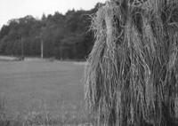VOIGTLANDER Bessa-R3Mで撮影した(稲架)の写真(画像)