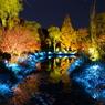 モネの庭ライトアップ!