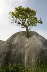 根性の石(平尾台)