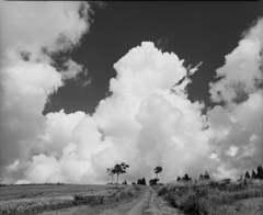 雲が湧く高原