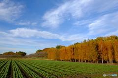 近郊の田園風景